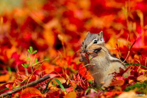 animals-autumn-18